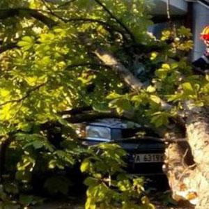 Дърво се срути върху 3 коли до операта в Бургас